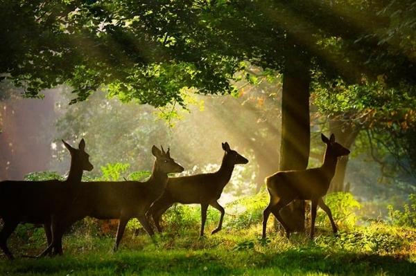 Doğadan seçmeler 6