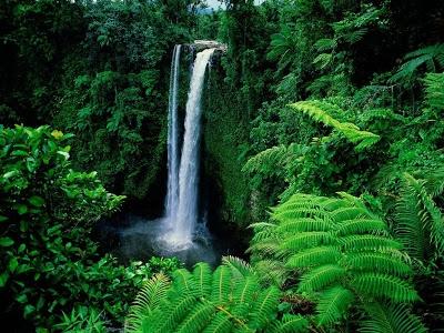 Yeşilin su ile birleşen güzelliği 10