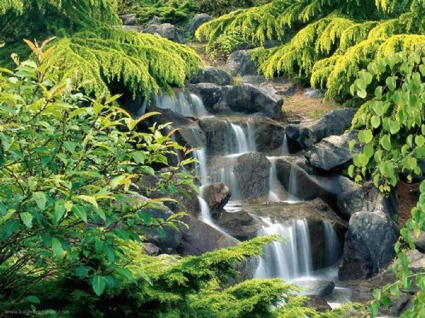 Yeşilin su ile birleşen güzelliği 11
