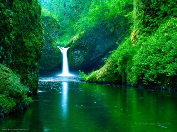 Yeşilin su ile birleşen güzelliği 2