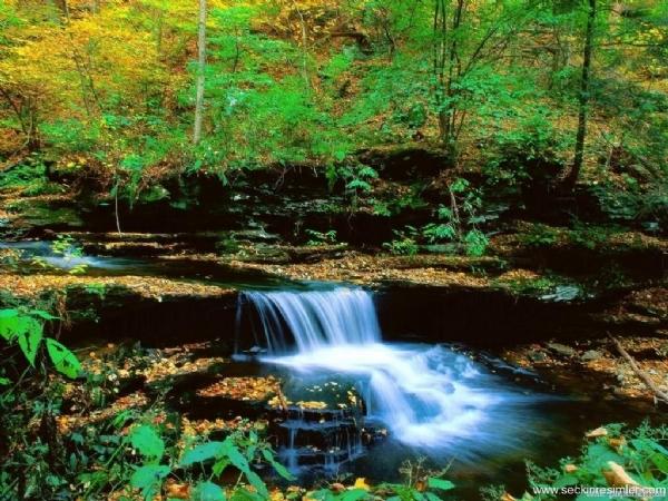 Yeşilin su ile birleşen güzelliği 3