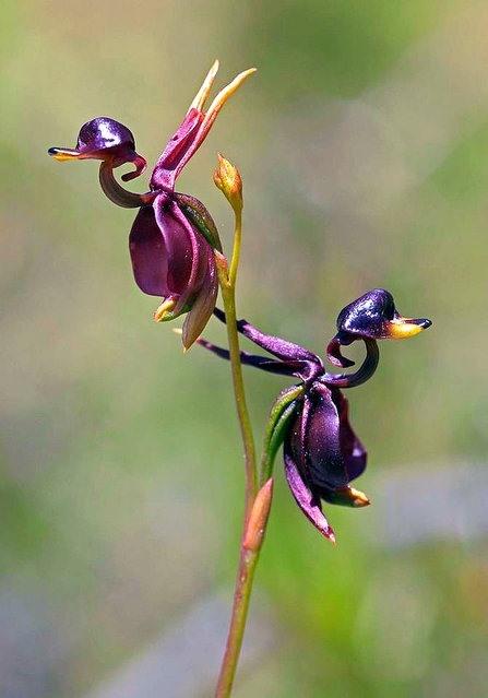 Alışılmamış çiçek türleri 1