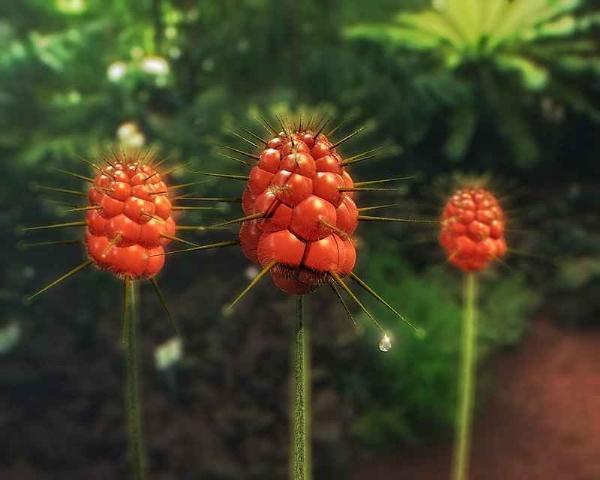 Alışılmamış çiçek türleri 10