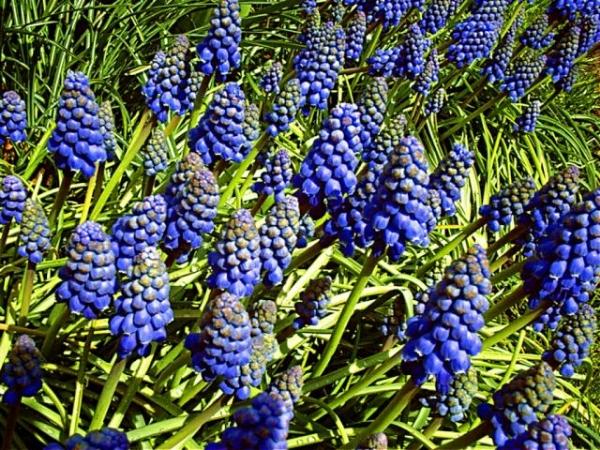 Alışılmamış çiçek türleri 12