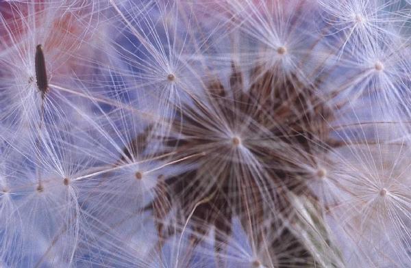 Alışılmamış çiçek türleri 14