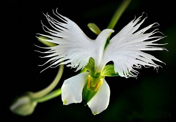 Alışılmamış çiçek türleri 5