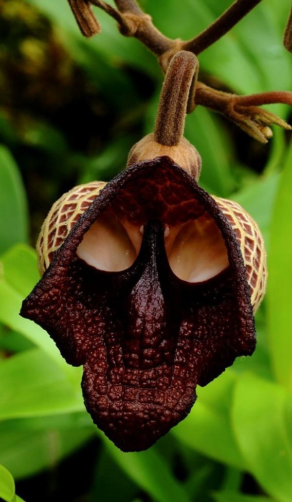 Alışılmamış çiçek türleri 7