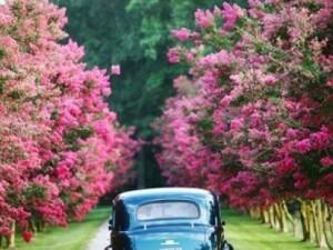 En renkli arabalar