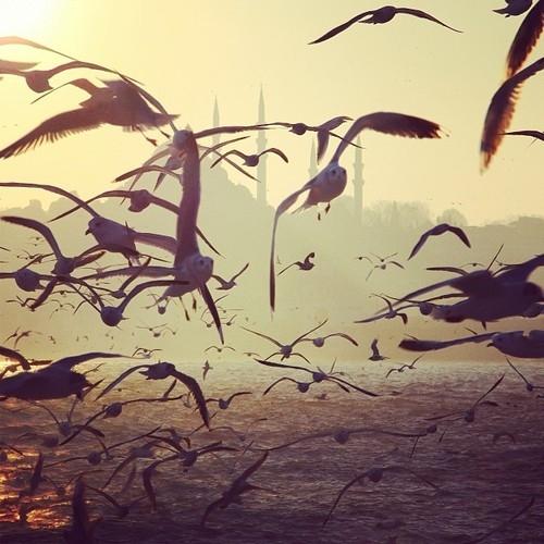 Fotoğraflarla İstanbul galerisi resim 9