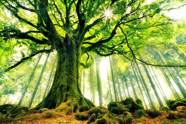 En renkli ağaçlar galerisi resim 1