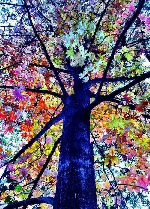 En renkli ağaçlar 15
