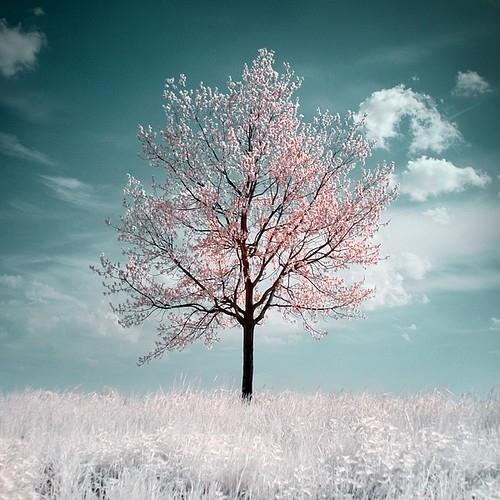 En renkli ağaçlar 5