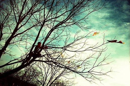 En renkli ağaçlar galerisi resim 6