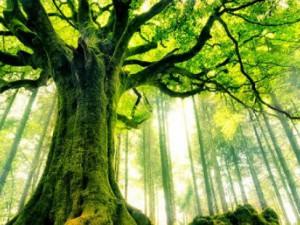 En renkli ağaçlar