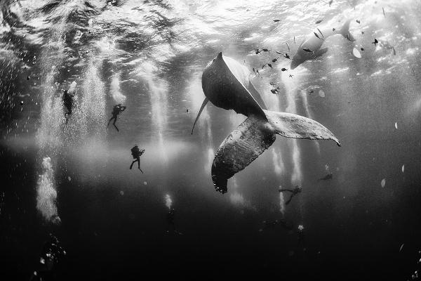 National Geographic Gezgin Fotoğrafları Yarışması'nı kazanan 10 fot 10