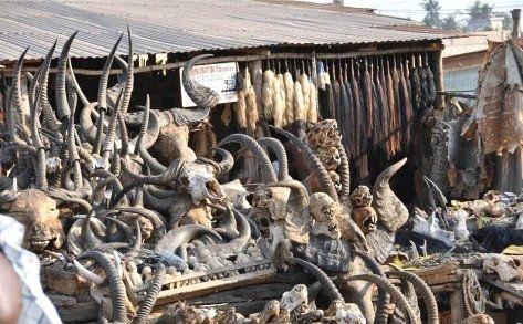 --AFRİKA'NIN VOODOO BÜYÜCÜLERİNİN KORKUNÇ YÖNTEMLERİ 1