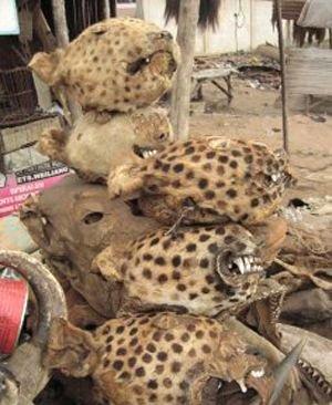 --AFRİKA'NIN VOODOO BÜYÜCÜLERİNİN KORKUNÇ YÖNTEMLERİ 19