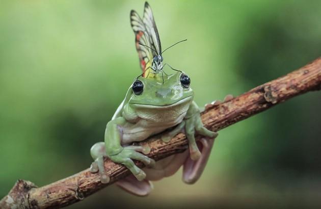 Kurbağaların şaşkınlık yaratan eğlenceli dünyası 1