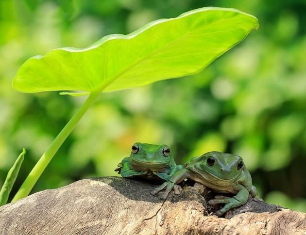 Kurbağaların şaşkınlık yaratan eğlenceli dünyası 20