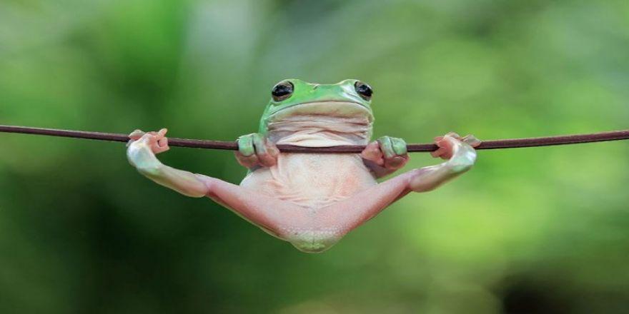 Kurbağaların şaşkınlık yaratan eğlenceli dünyası