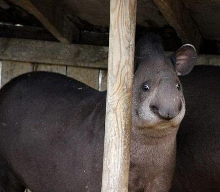 Hayvanların komik anları 2
