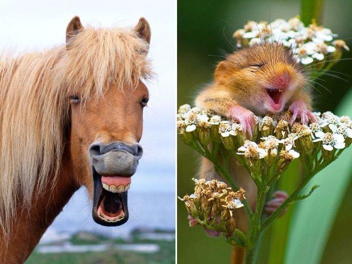 Hayvanlarda güler ! İşte gülen hayvanlar 1