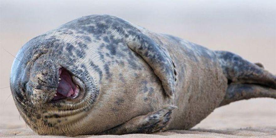 Hayvanlarda güler ! İşte gülen hayvanlar