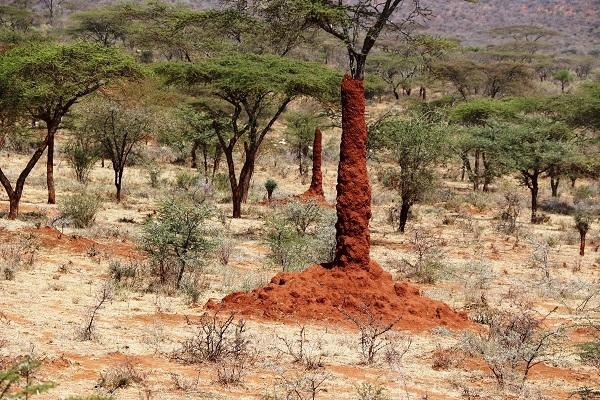 Büyüleyen karınca gökdelenleri 1