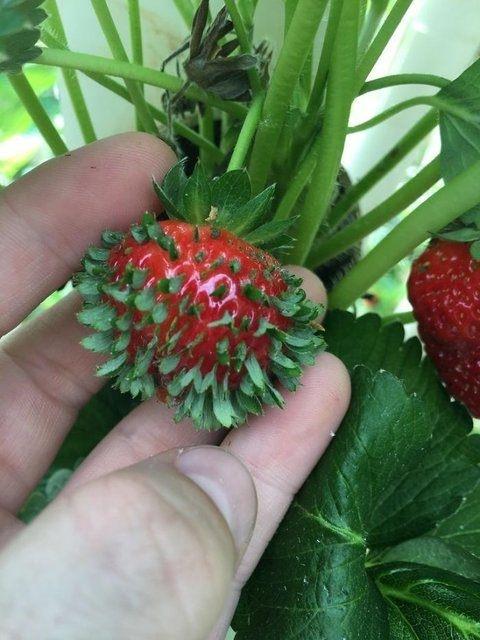 Tuhaf bitkiler, sebze ve meyveler 1