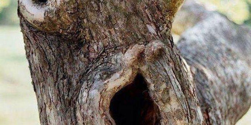Doğadaki 'gizli' silüetler