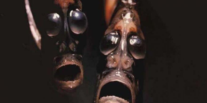 Birbirinden ilginç balıklar! Bu balıkları daha önce hiç görmediniz