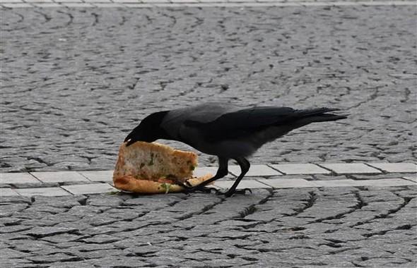 Karganın öğle yemeği ziyafeti