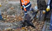 10 Kasım Törenlerinin Yapıldığı Alana Domuz Leşi Bırakıldı