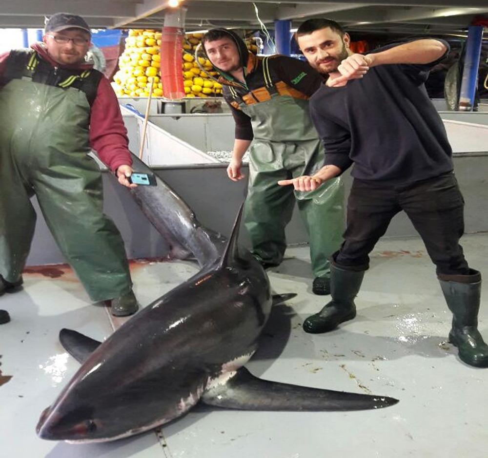 Tekirdağ'da köpek balığı yakalandı