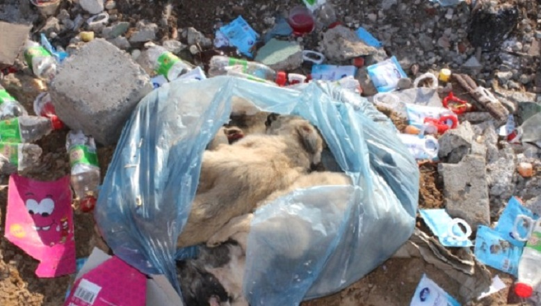 Bunun adı vahşet! Çöplüğe atılan poşetten çıktı