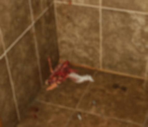 Tuvalette tavuk kestiler