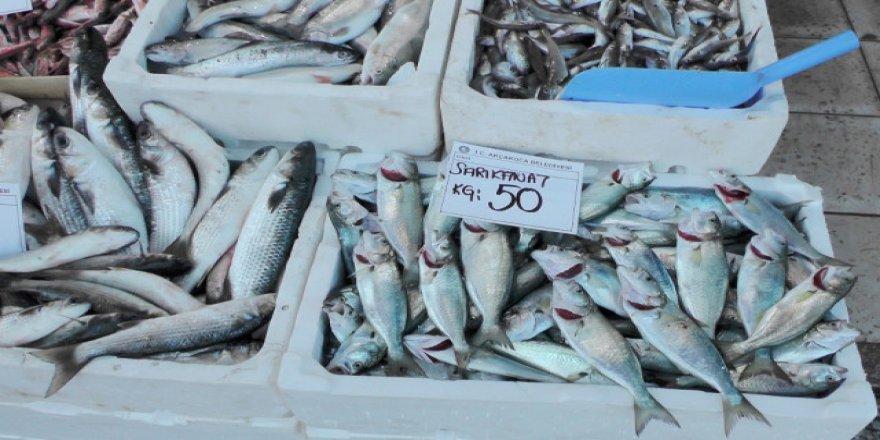 Balık kıtlığı avcıları çıldırttı, kilosu 50 lirayı buldu