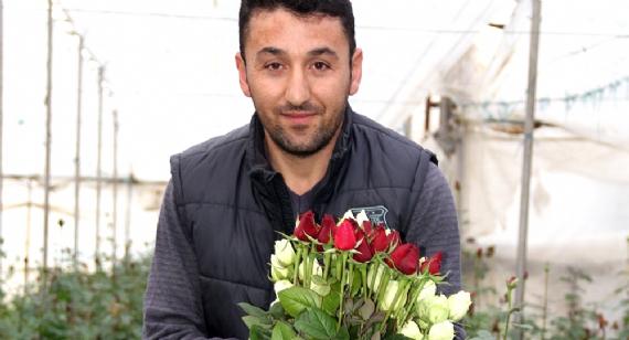 Gül üreticileri 14 Şubat Sevgililer Günü için üzgün!