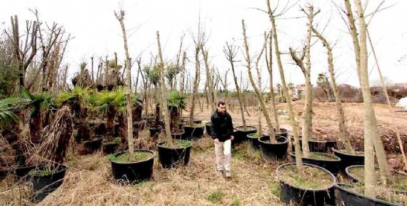 Sökülen bitkiler geri dönüşümle tekrar kullanılıyor