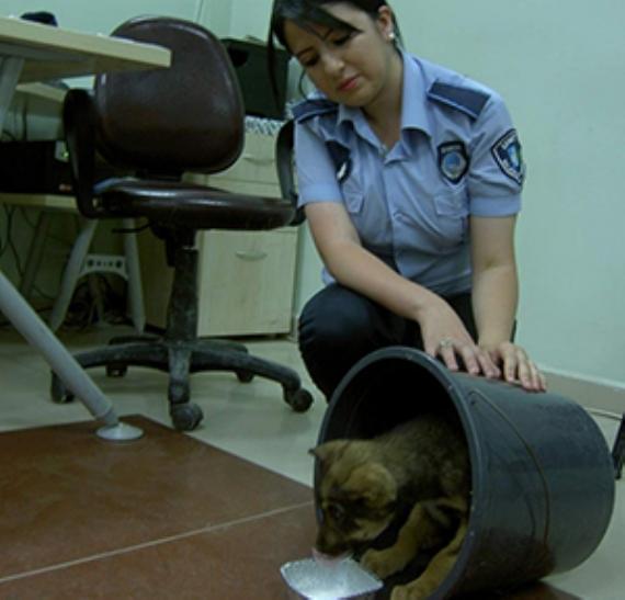 İzmit Belediyesi 2 bin 866 hayvan topladı