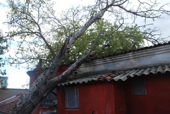 Ağaç evin üzerine devrildi!