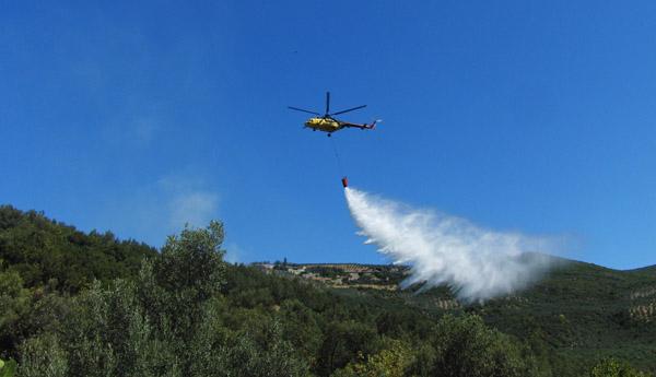 Gemlik'te 200 zeytin ağacı yandı!