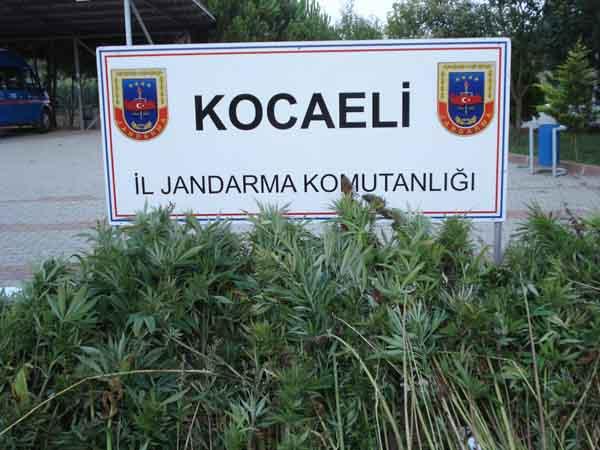 Jandarma'dan hint keneviri operasyonu!