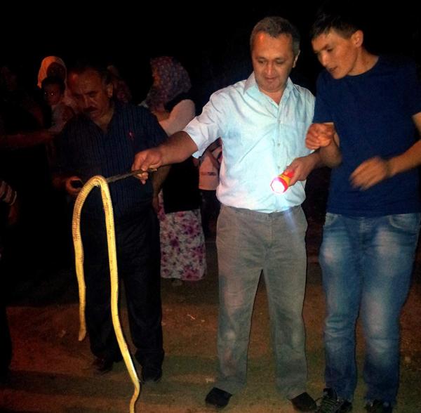 Dama giren yılanı elektirik çarptı!