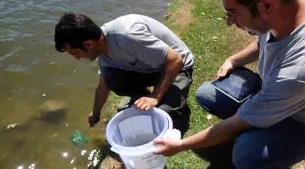 Sivrisineklere karşı avcı balıklar kullanılacak