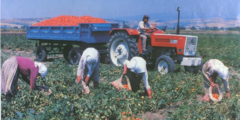 Çiftçilere hibe desteği verilecek!