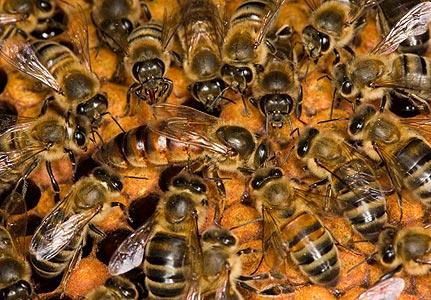 Eskihisar'da arılar dehşet saçtı!