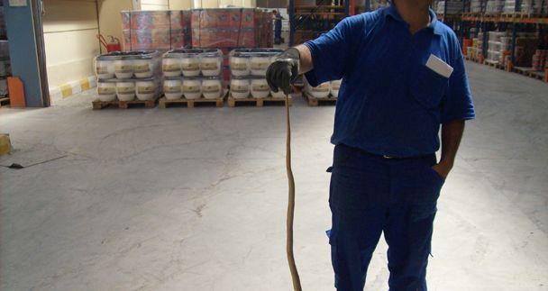 Fabrika deposundan yılan çıktı!