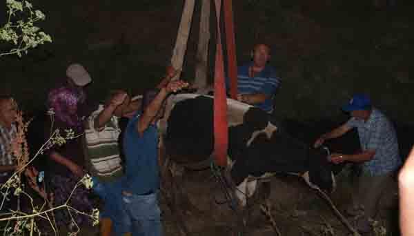 Gebze'de inek kurtarma operasyonu!