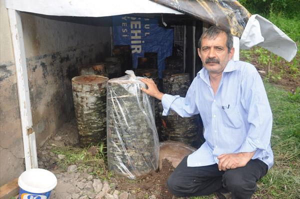 Dahi köylü kayın kütüğünde mantar üretiyor!